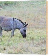 Donkey 005 Wood Print