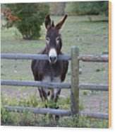 Donkey At The Fence Wood Print