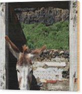 Donkey At The Window Wood Print