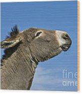 Donkey Demanding A Treat Wood Print