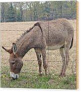 Donkey Finds Greener Grass Wood Print