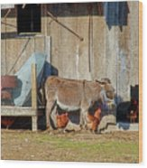Donkey Goat And Chickens Wood Print