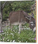 Donkey Grazing In Greece Wood Print