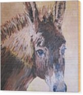 Donkey In The Sunlight Wood Print