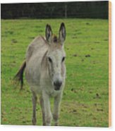 Donkey On A Farm Wood Print