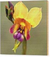 Donkey Orchid Wood Print