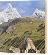 Donkeys Grazing In The Mountains Wood Print