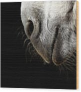 Donkey's Mouth Wood Print