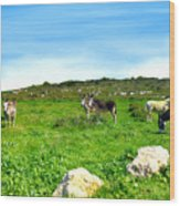 Donkeys Under A Blue Sky In Green Hills Wood Print
