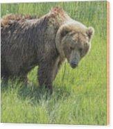 Don't Mess With Mama Bear Wood Print