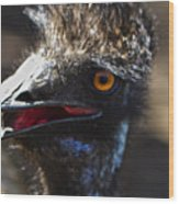 Dont Mess With The Emu Wood Print