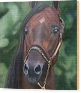 Dont Worry Saddlebred Sire Wood Print