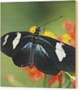 Doris Butterfly Wood Print