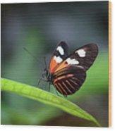 Doris Longwing Butterfly 2017 Wood Print