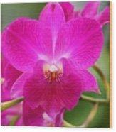 Dendrobium Orchid 2 Wood Print