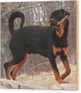 Rottie With A Tail And Stick Wood Print