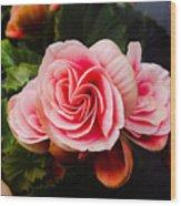 Double Begonia Wood Print