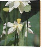 Double Blossom Wood Print
