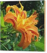 Double Blossom Orange Lily Wood Print