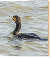 Double-breasted Cormorant Wood Print