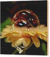 Double Bubble Flower Wood Print