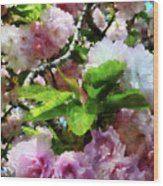 Double Cherry Blossoms Wood Print