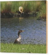 Double-crested Cormorant 3 Wood Print