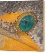 Double-crested Cormorant's Emerald Eye Wood Print