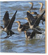 Double Crested Cormorants Wood Print