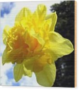 Double Daffodil Wood Print