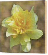 Double Headed Daffodil Wood Print
