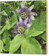 Double Passion Flowers Wood Print