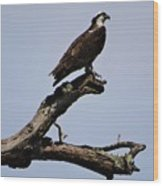 Double Perches Wood Print