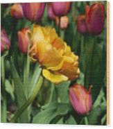 Double Petal Yellow Tulip Wood Print