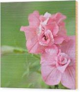 Double Petunias Wood Print