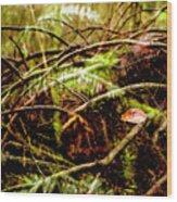 Double Rainforest Wood Print