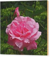 Double Rose Wood Print