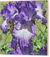 Double Ruffled Purple Iris Wood Print