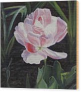 Double Sassy Tulip Wood Print