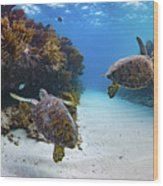 Double Turtles Wood Print