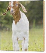 Dougie The Goat Wood Print