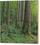 Douglas-fir Wood Print