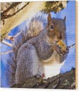 Douglas Squirrel Eating Wood Print