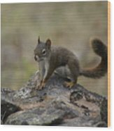 Douglas' Squirrel On The Rocks Wood Print