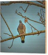Dove #g2 Wood Print