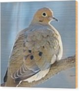 Dove In Evening Light Wood Print by Lori Frisch