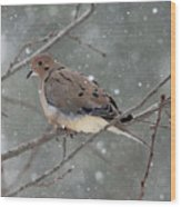 Dove In The Snow Wood Print