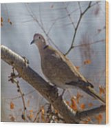 Dove On A Branch Wood Print