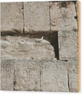 Dove On The Kotel Wood Print