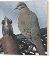 Doves New Pal Wood Print